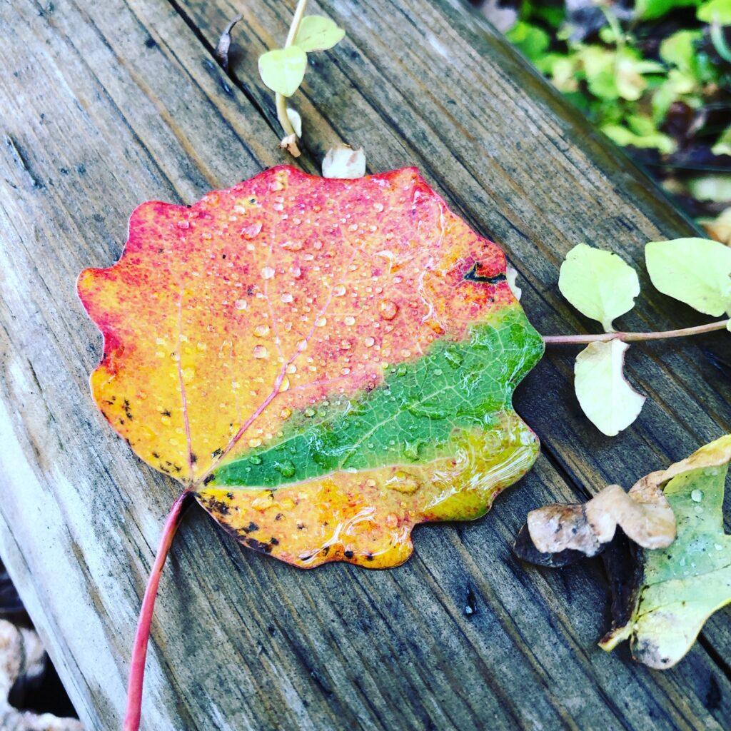 höstlöv i vackra färger